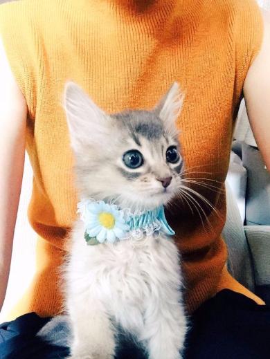 ダレノガレ明美猫ジジちゃん