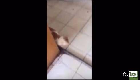 猫を追う鼠