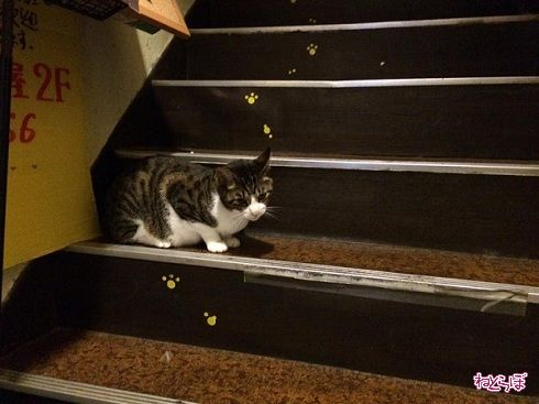 猫居酒屋赤茄子