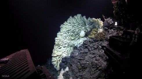 巨大海綿動物