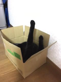 猫神家の一族