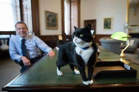 英外務省の猫