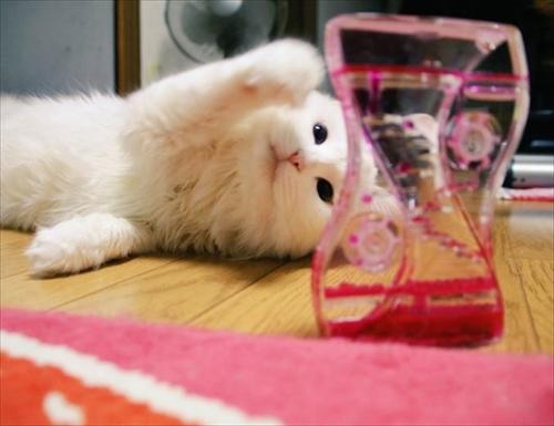 猫のシラスちゃん