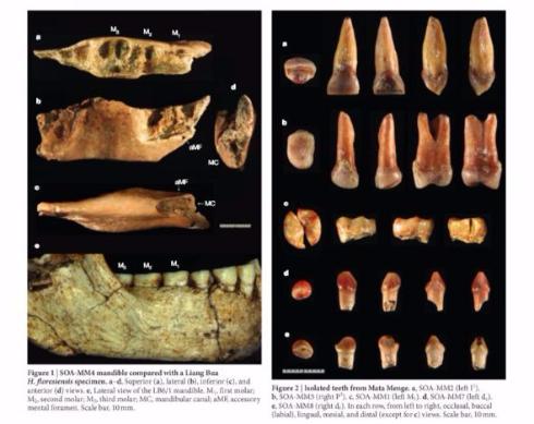 フローレス原人 約70万年前 化石