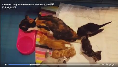 虐待で繰り返し壁に叩きつけられた母猫