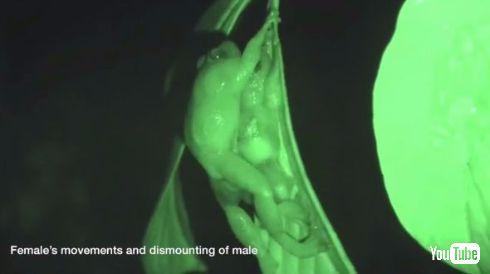 カエル 交尾 7番目の体位