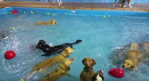 泳がないワンコ