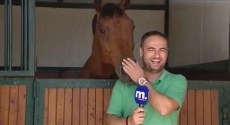 馬とリポーター