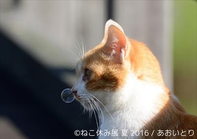 ねこ休み展 夏 2016