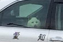 パトカー犬