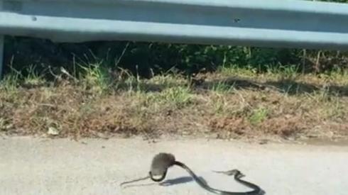 母ネズミ 子ネズミ ヘビ