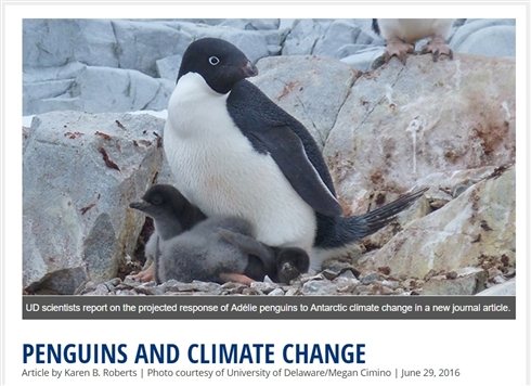 南極大陸のアデリーペンギンが2099年には60パーセント減少