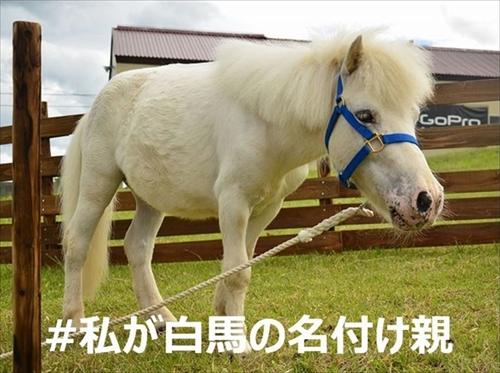 白馬命名キャンペーン