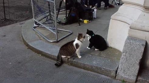 イギリスの2大公務員猫「首相官邸ネズミ捕獲長」と「外務・英連邦省ネズミ捕獲長」のバトルが勃発