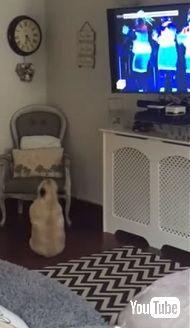 Wham! の曲にノリノリで踊る犬