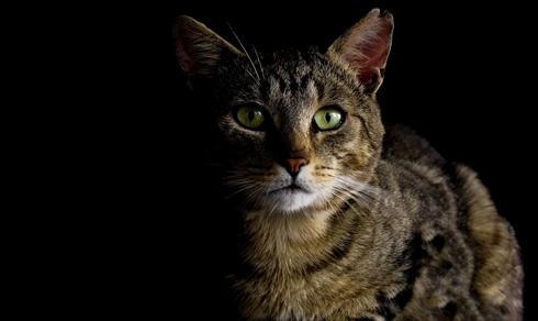 猫フラッシュ撮影失明