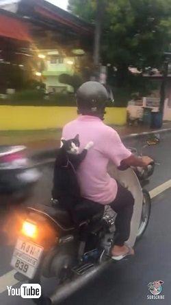 スクーター猫