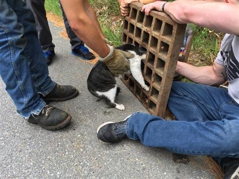 雨水溝の鉄柵に挟まった猫