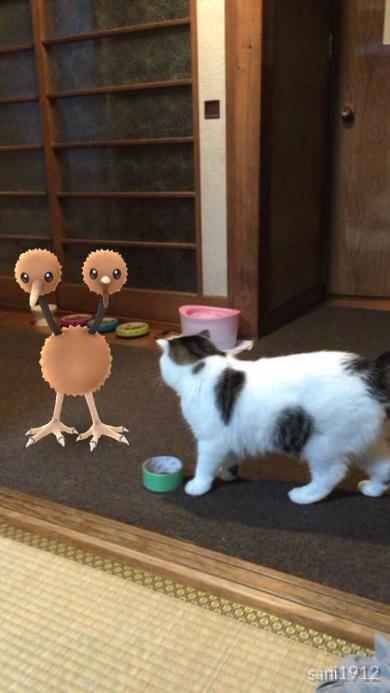 ポケモンGO 猫 見えてる ドードー