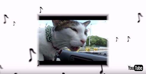 猫×クラシック「ニャンクラ」
