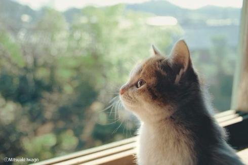 岩合光昭 ねこ 猫 写真展 全国17会場