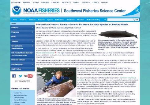 クジラ 新種 NOAA