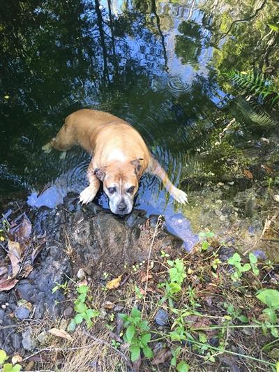 山中の迷子犬救出劇