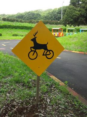 シカ自転車