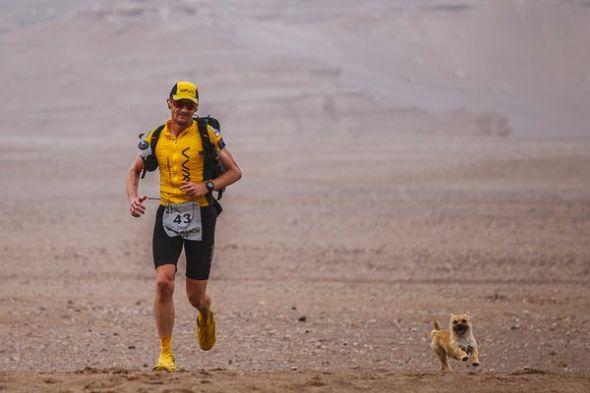ゴビ砂漠の子犬