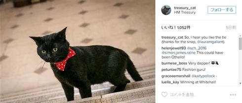 イギリス財務省に待望の公務員猫が着任