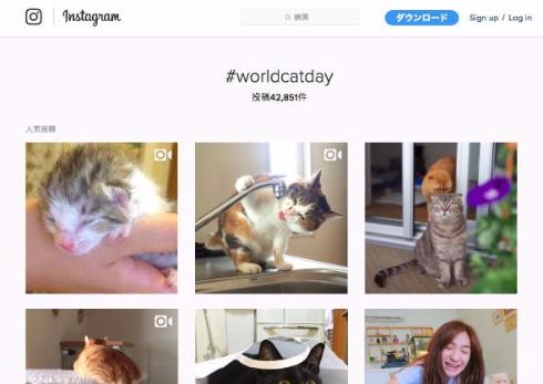 世界のかわいいネコ画像がTLに集結