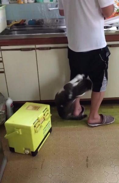 猫 ねだる ズボン 脱がす