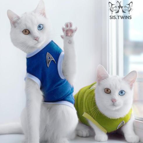 オッドアイ猫