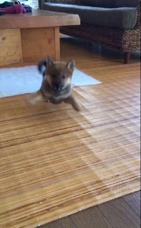 モンスター 犬 かわいい ポケモン