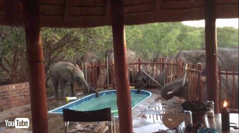 ゾウさん プール 水