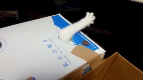 猫 貯金箱 再現 手