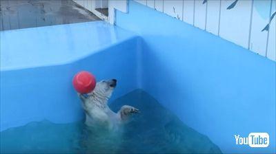 釧路市動物園ミルク