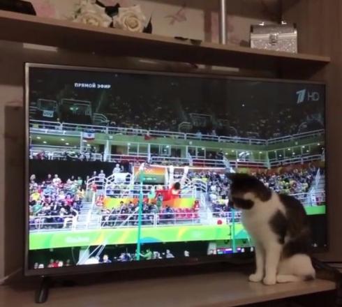 猫 体操 リオ五輪