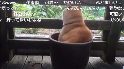犬 鉢犬 蝉