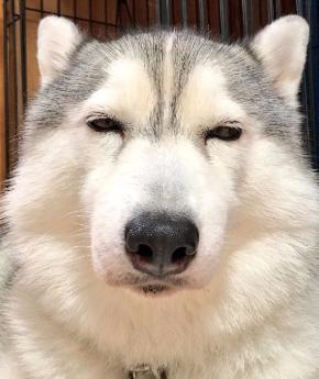 同じ犬 顔 違い ギャップ