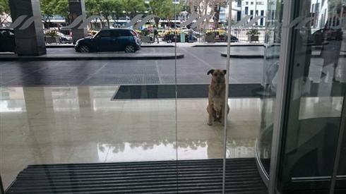 ホテル前で何カ月も待ち続けたわんちゃん