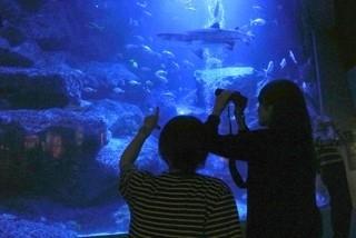 すみだ水族館「ウミガメ展」