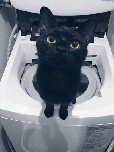 洗濯機で遊ぶ黒猫