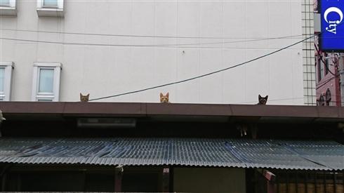 「この写真の中に猫がいます」