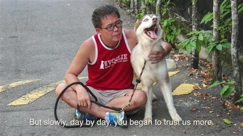 シンガポールのアニマルシェルターが視力を失った犬へ追悼動画を公開
