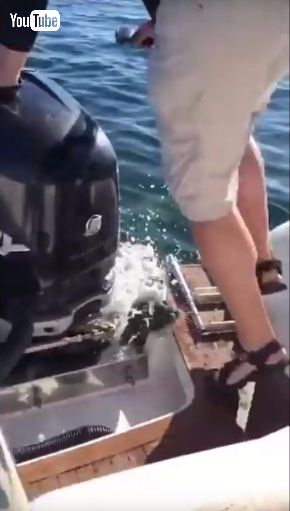 アザラシ シャチ 避難 ボート