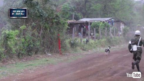 ラリー 犬 ジャンプ 回避