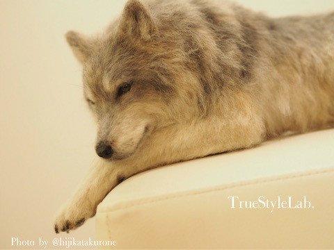 オオカミ 羊毛フェルト 和展 True Style Lab