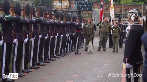 ニルス・オーラヴ 准将 昇進 ペンギン ノルウェー軍
