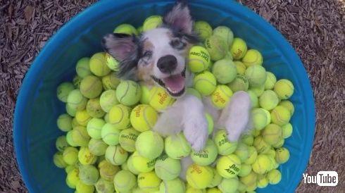 犬 テニスボール YouTube